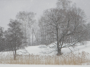 Snow_blizzard